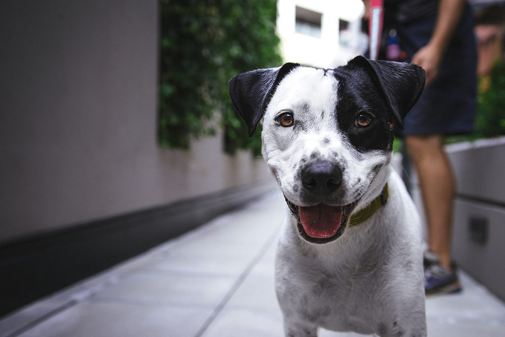 How dogs can help in recovery